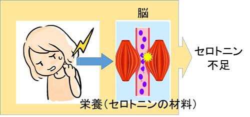 セロトニン説明の図