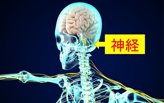 神経の写真