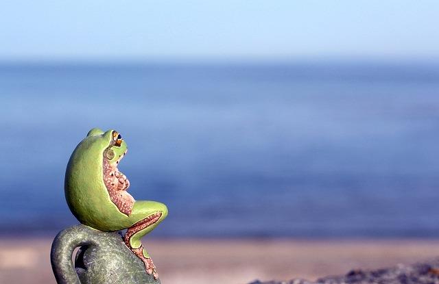 大海を眺めるカエル