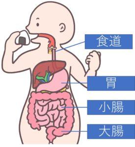 消化器の図