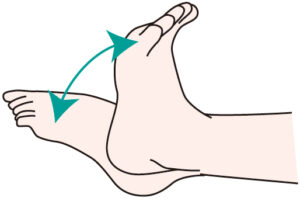 足関節の底屈、背屈
